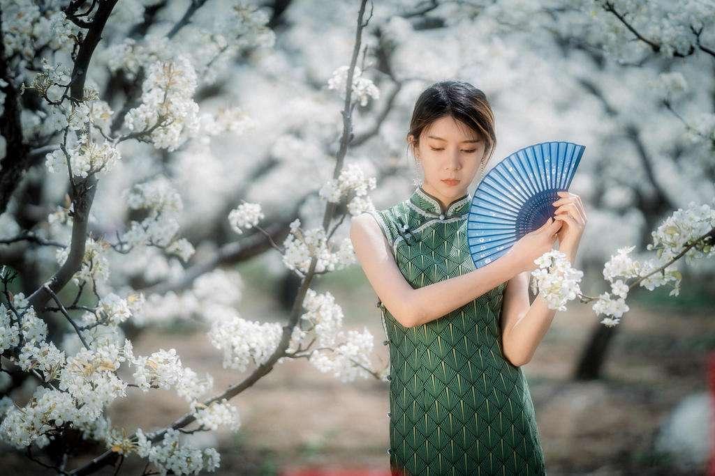 樱花树下的旗袍美女